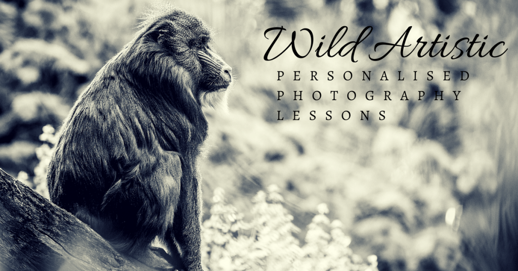 Photography lessons in Tasmania