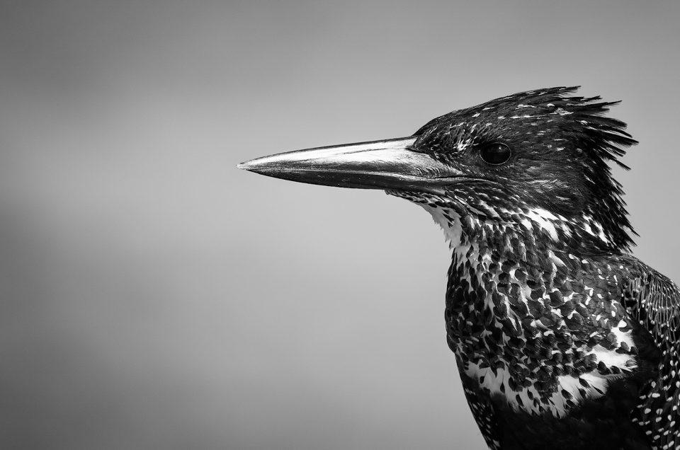 10 Bird Photography Tips