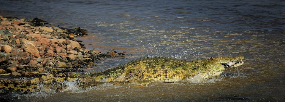 Custom Shooting Modes – Wildlife Photography Quick Tips